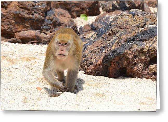 Beach Monkey Greeting Card by Aaron Littler