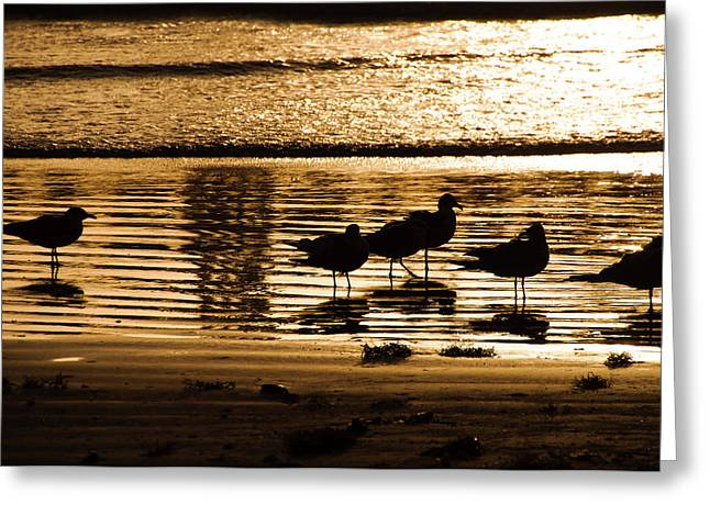 Beach Morning Greeting Card by John Collins