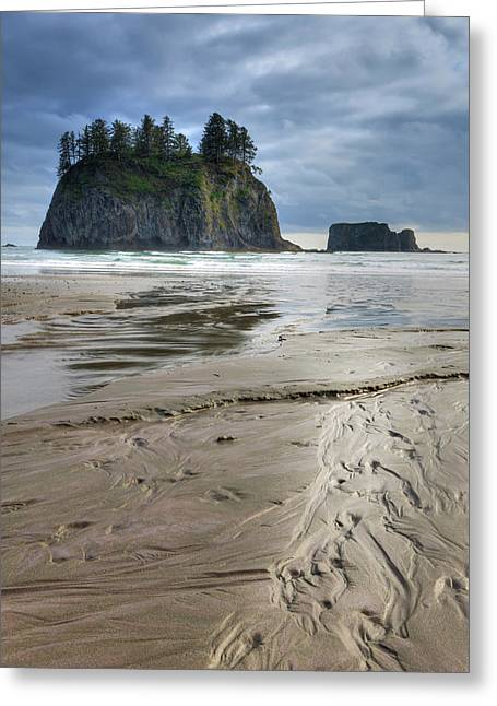 Beach Olympic National Park Greeting Card by Tom Norring