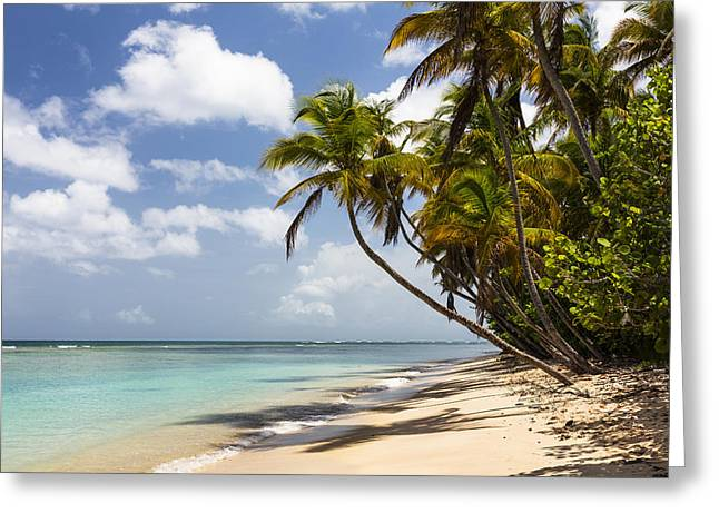 Beach Pigeon Point Tobago West Indies Greeting Card by Konrad Wothe