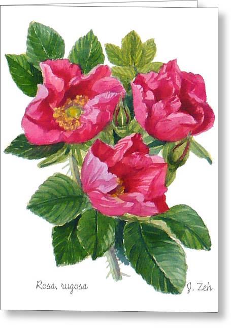 Beach Roses -  Rosa Rugosa Greeting Card