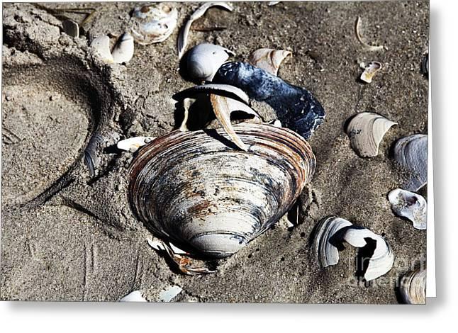 Beach Shells Greeting Card by John Rizzuto