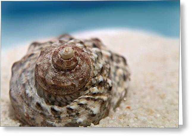 Greeting Card featuring the photograph Beach Treasure by Micki Findlay