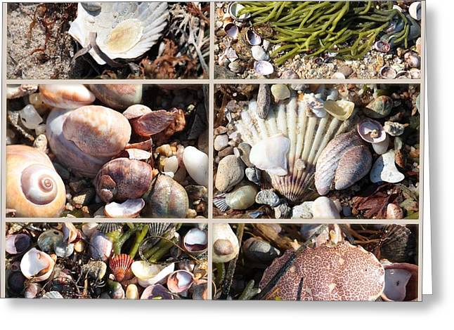 Beach Treasures Greeting Card by Carol Groenen