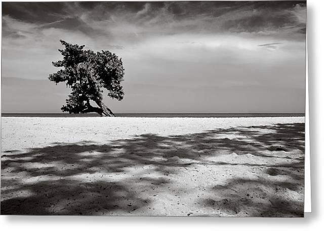 Beach Tree Greeting Card by Dave Bowman