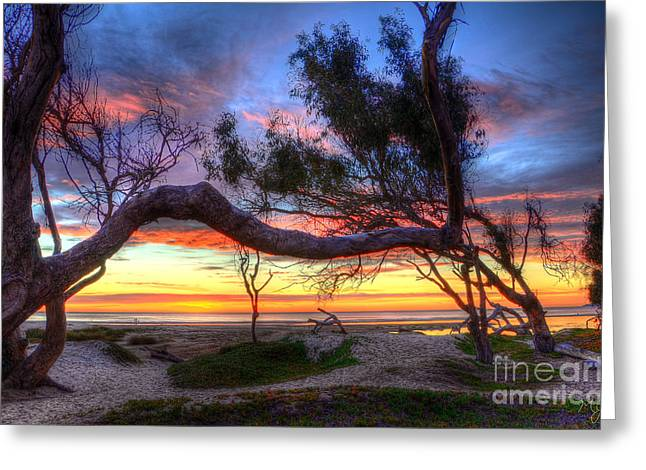 Beach Tree Sunset View Greeting Card