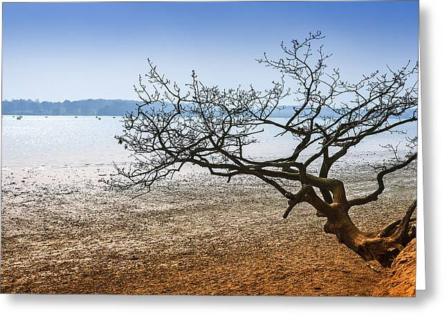 Beach Tree Greeting Card by Svetlana Sewell