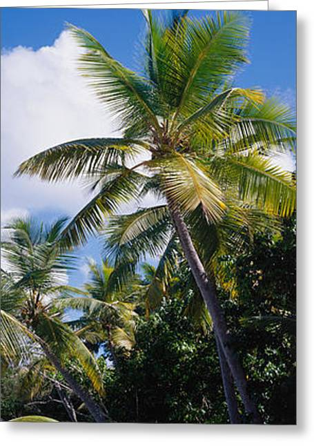 Beach Us Virgin Islands Greeting Card by Panoramic Images
