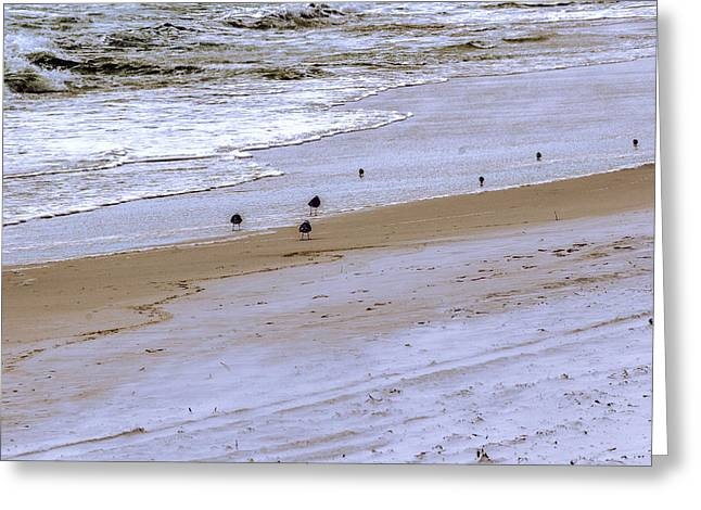 Beachcombing - Beach - Seascape Greeting Card by Barry Jones