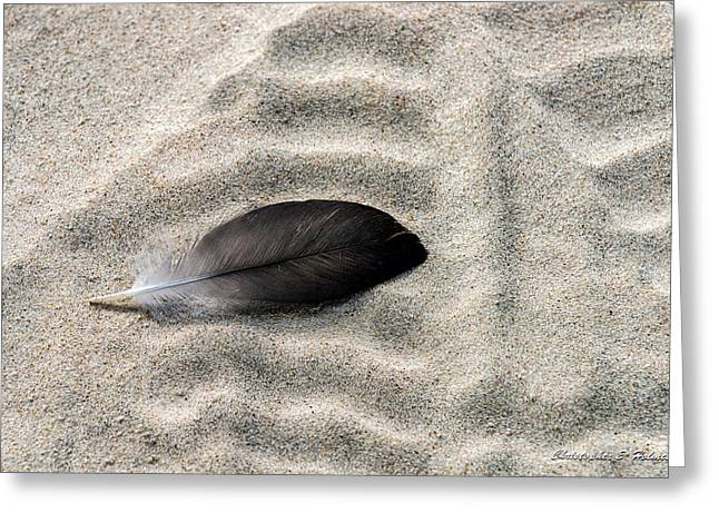 Beached Feather Greeting Card by Christopher Holmes
