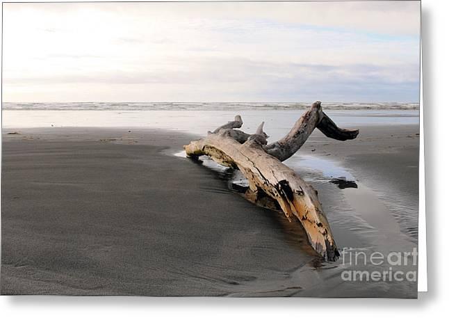 Beached Log Greeting Card