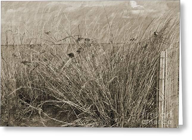 Beachgrass Greeting Card by Arlene Carmel