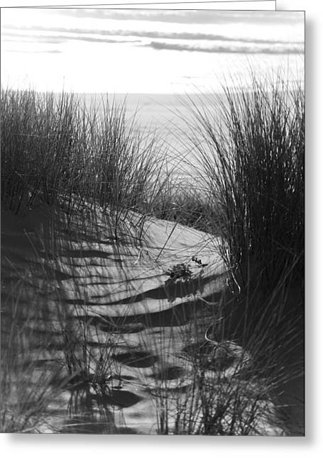 Beachgrass Greeting Card by Adria Trail