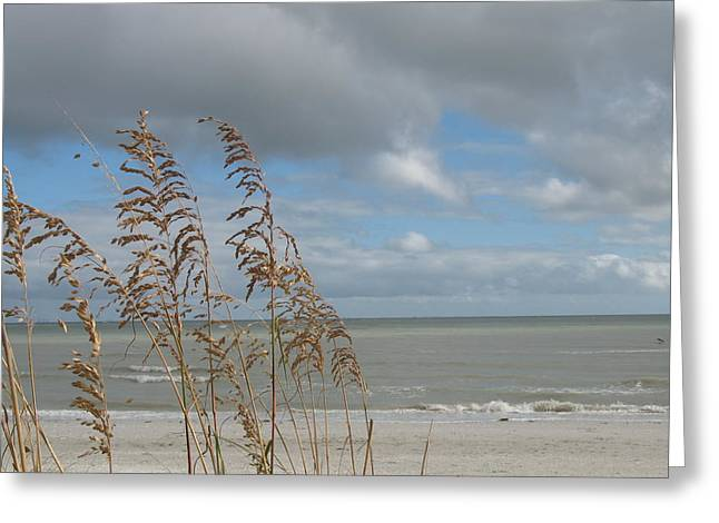 Beachview With Seaoat  Greeting Card by Christiane Schulze Art And Photography