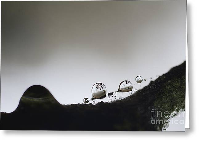 Beads Of Rain With Particles Floating Greeting Card by Dan Friend