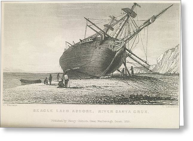Beagle Laid Ashore Greeting Card by British Library