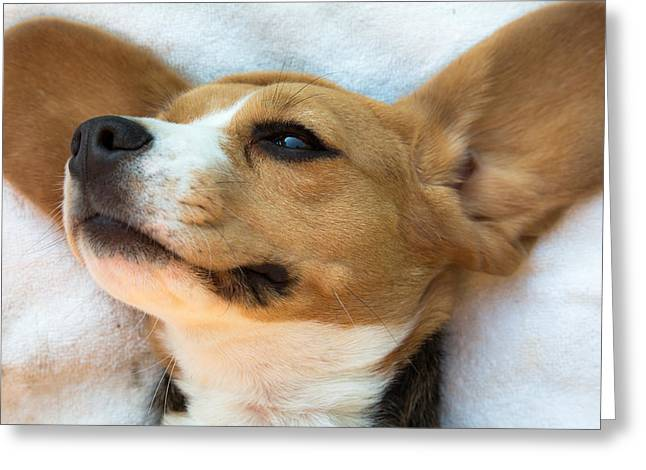 Beagles Dreams Greeting Card