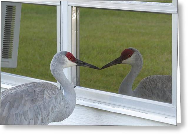 Beak To Beak Greeting Card