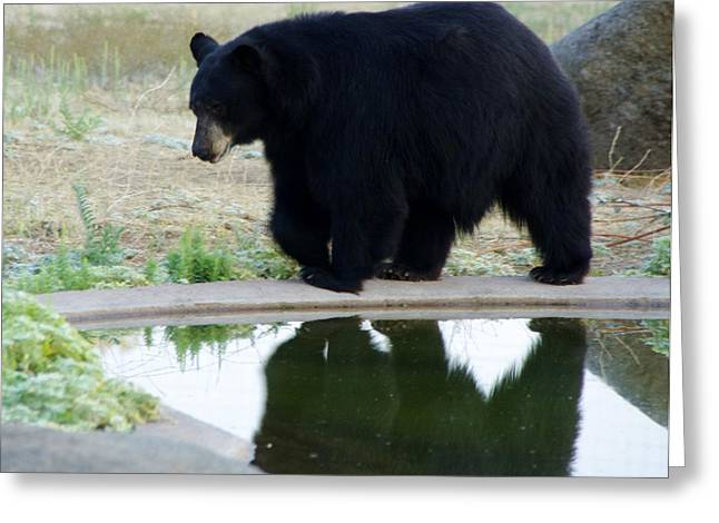 Bear 2 Greeting Card