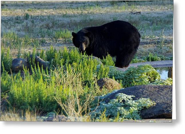 Bear 3 Greeting Card