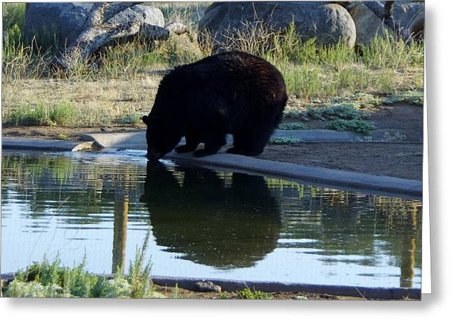 Bear 4 Greeting Card