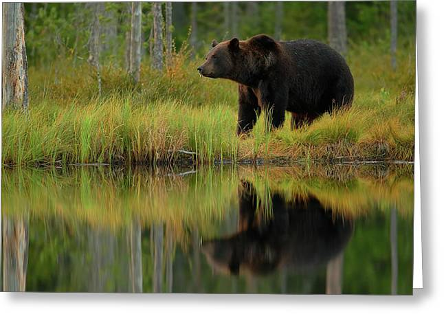 Bear And Fish *** Greeting Card by Assaf Gavra