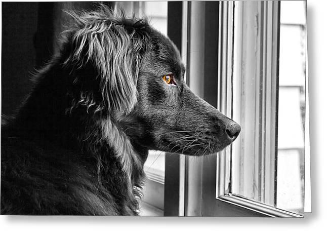 Bear At Window Greeting Card by Tim Buisman