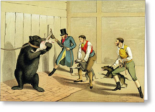 Bear Baiting Greeting Card by Henry Thomas Alken