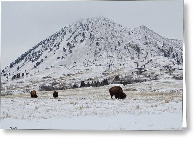 Bear Butte Buffalo Greeting Card