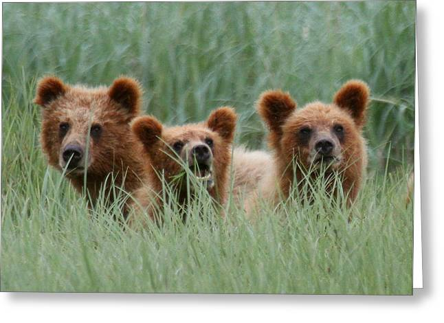 Bear Cubs Peeking Out Greeting Card