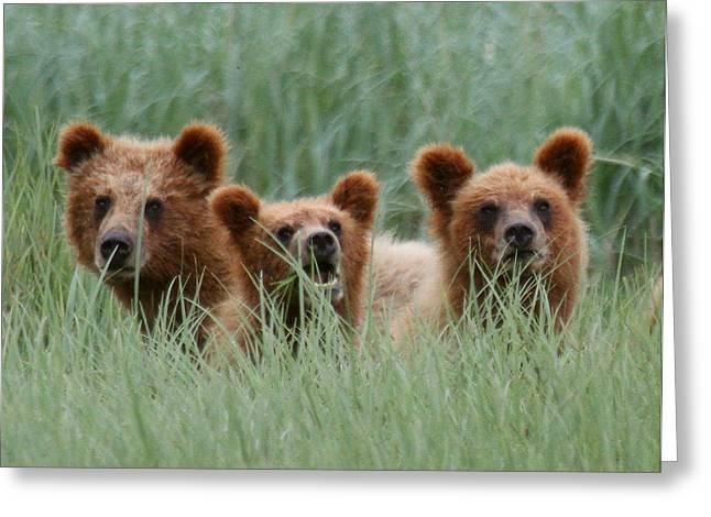 Bear Cubs Peeking Out Greeting Card by Myrna Bradshaw