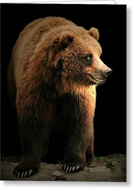 Bear Essentials Greeting Card by Diana Angstadt