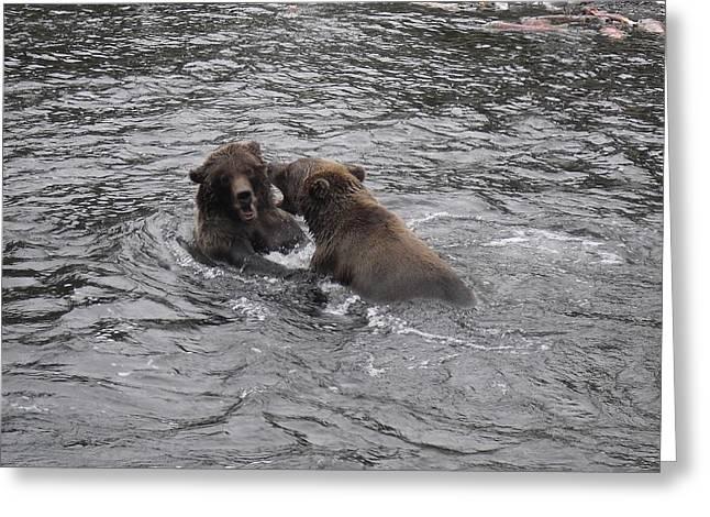 Bear Fight Greeting Card by Zane Giles