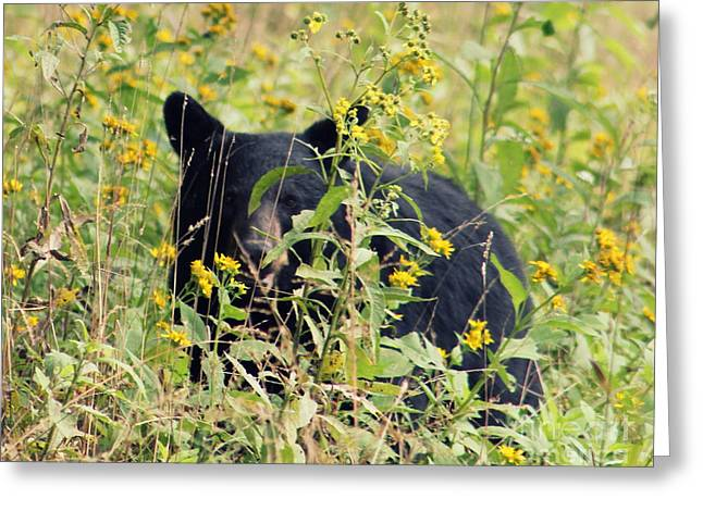 Hey I'm Looking At You. Cades Cove Greeting Card