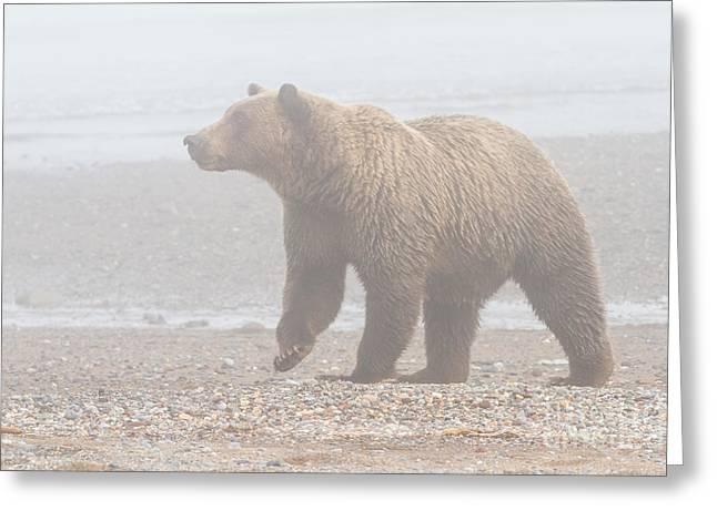 Bear In Fog Greeting Card