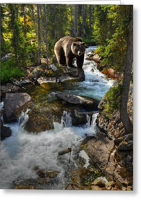 Bear Necessity Greeting Card by Ken Smith
