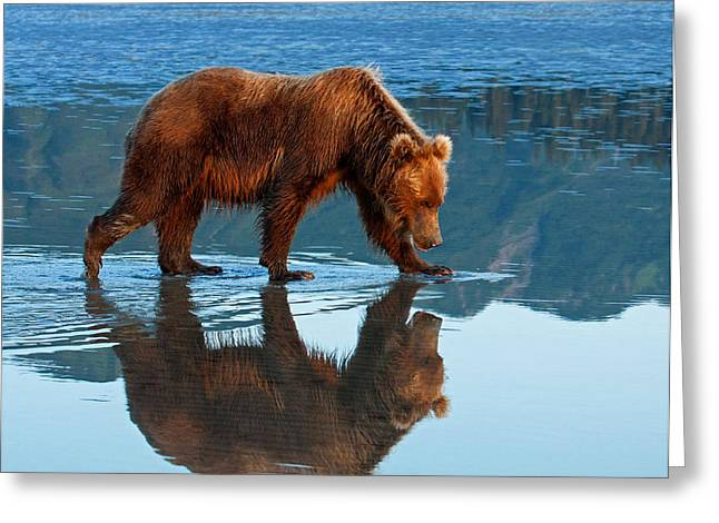 Bear Of A Reflection 8x10 Greeting Card