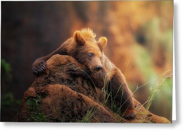 Bear Portrait Greeting Card