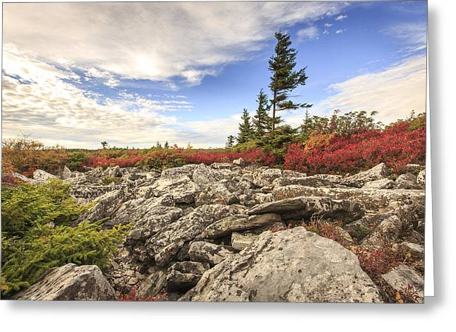 Bear Rocks Preserve Greeting Card by Jennifer Grover