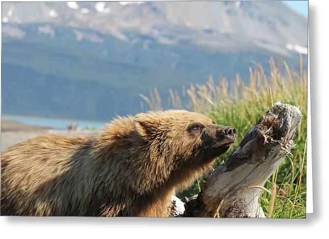 Bear Sniffs Air Greeting Card