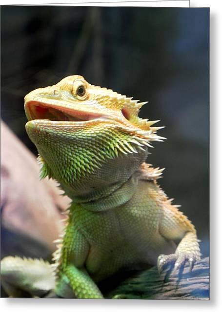 Bearded Dragon Greeting Card by Michael Caron