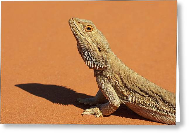 Bearded Dragon Greeting Cards Fine Art America