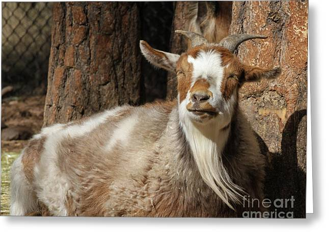 Bearded Goat Greeting Card by Cooper Staton