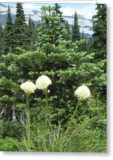 Beargrass Greeting Card