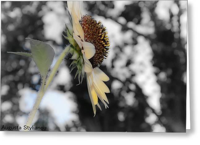 Beatiful Flower Greeting Card by Augusta Stylianou