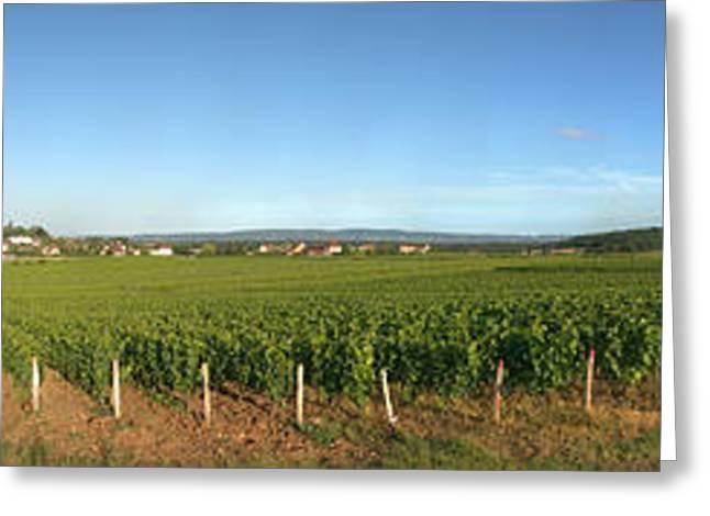 Beaujolais Vineyard, Jully-les-buxy Greeting Card
