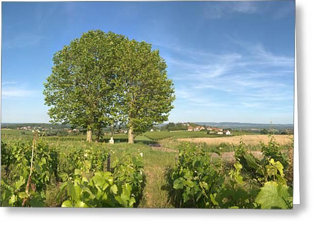 Beaujolais Vineyard, Montagny Greeting Card