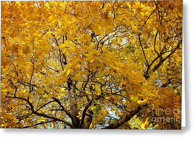 Beautiful Autumn Tree Greeting Card by Jolanta Meskauskiene