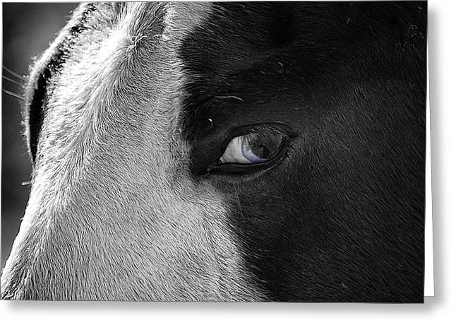 Beautiful Blind Soul Horse Greeting Card