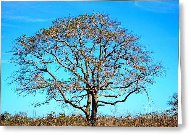 Greeting Card featuring the photograph Beautiful Branching by Debra Martz